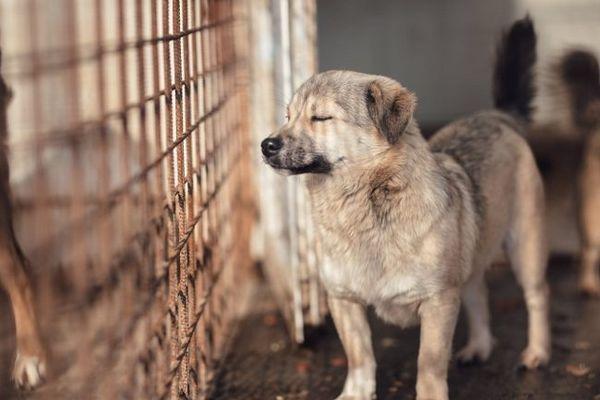race adulte mélangée dans un enclos intérieur pour chien