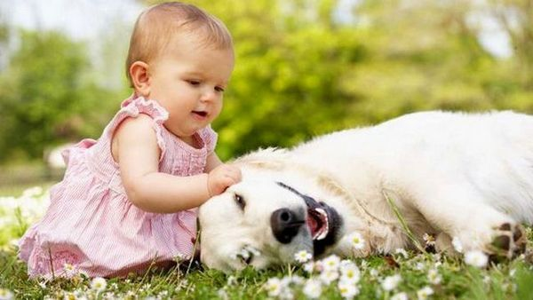 Introduire bébé à un chien: le guide ultime