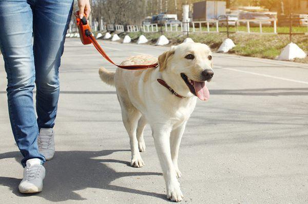 Le promeneur de chien surveille-t-il votre quartier?