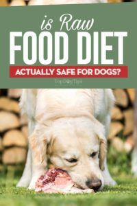 La nourriture crue est-elle sûre pour les chiens?