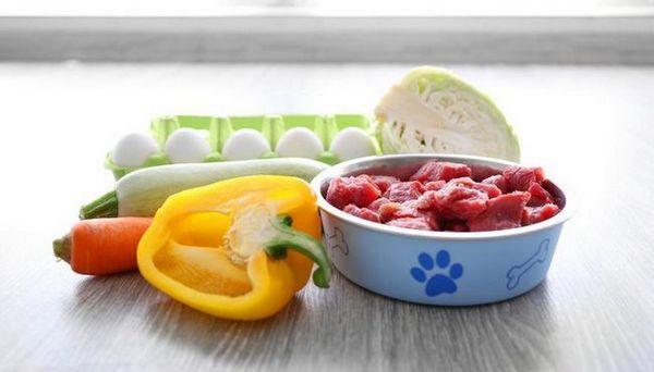 Est-ce qu`un régime alimentaire cru est sécuritaire pour les chiens