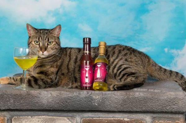 C`est la boisson nationale du vin avec votre semaine de chat et les boissons sont allumées!