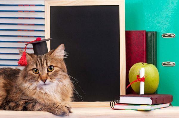 C`est vrai! Les chats sont vraiment des génies secrets, selon la science