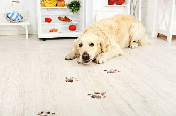 Gardez votre maison sécuritaire et impeccable avec des produits de nettoyage naturels acceptant les animaux de compagnie