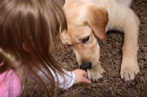 Enfants et chiens - comment préparer votre maison, votre enfant et vous-même pour un chien