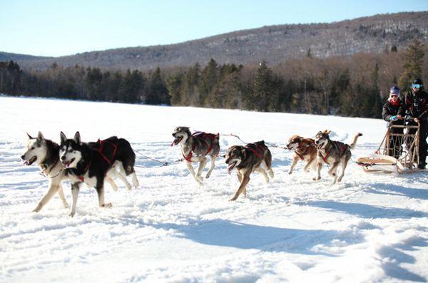 Des enfants atteints de cancer font équipe avec des chiens de traîneau pour affronter le grand nord blanc