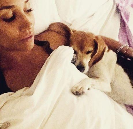 Meghan markle dévasté par la blessure de son chien sauvé