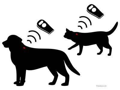 Puce de chien et chat