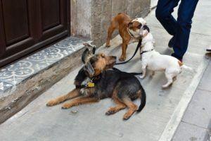 colliers de chien robustes