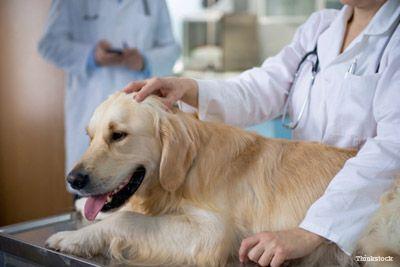 Moonshine stimule une visite inoubliable chez le vétérinaire
