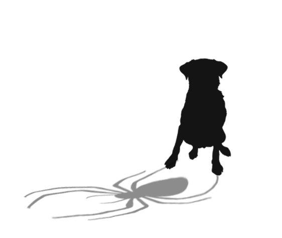 Mutant araignée: drôle ou dangereux? La perspective d`un vétérinaire