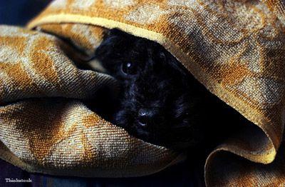 Mon chien a peur du tonnerre