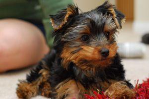 Conseils naturels sur les soins aux animaux - que devez-vous faire en tant que propriétaire d'animaux de compagnie?