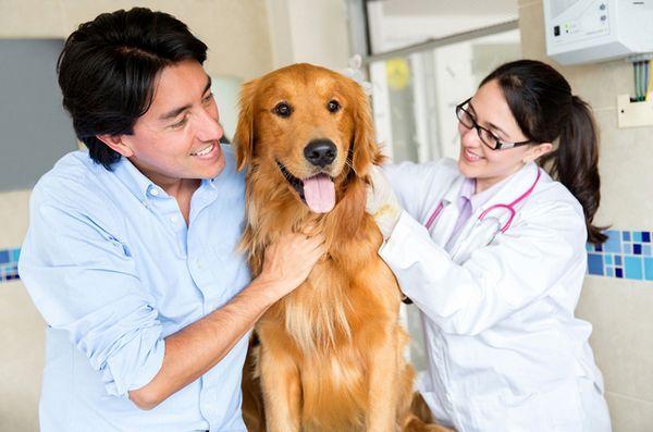 Les nouveaux résultats de la recherche sur le cancer canin pourraient également profiter aux gens