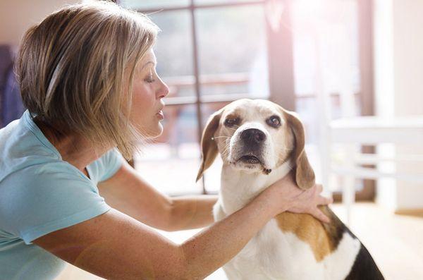 La nouvelle législation floridienne autorise les chiens de thérapie au tribunal