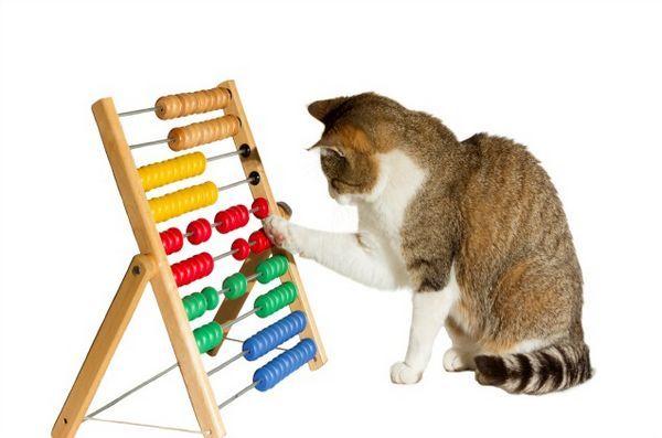 Une nouvelle recherche suggère que la formation de votre chat peut aider à éliminer son anxiété