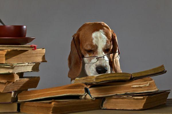 Une nouvelle étude montre que les chiens ne prennent pas de mauvais conseils