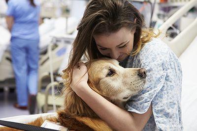 Chien de thérapie s`occupant d`une femme dans un hôpital