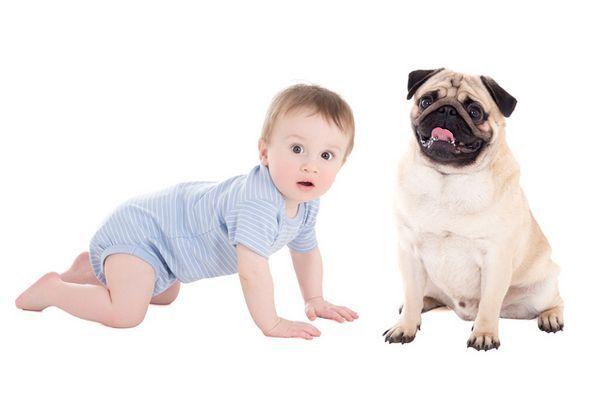 Aucun enfant n`est autorisé, mais les chiens sont les bienvenus au restaurant australien