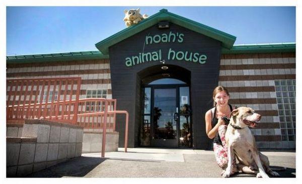 L'animalerie de Noé garde les animaux domestiques et les familles de violence ensemble