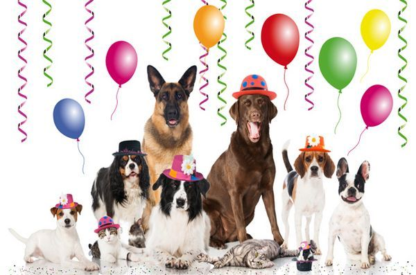 Pattes pour la journée nationale des animaux de compagnie