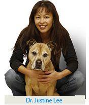 Adoptez un mois-chien-abri: ne pas reproduire ou acheter lorsque les animaux sans-abri meurent