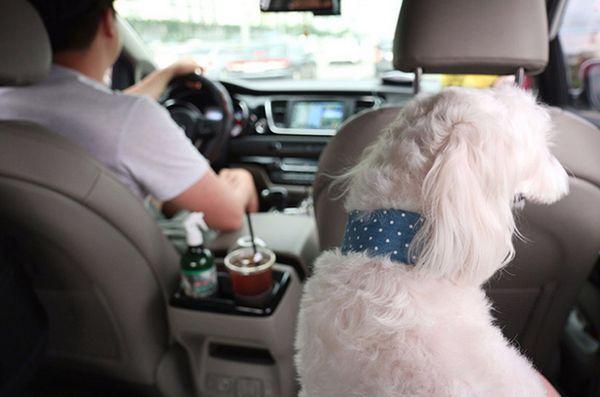 Les taxis pour animaux de compagnie sont une grosse affaire en Corée du Sud