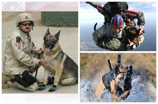 La fondation Petco fait un don en hommage aux chiens de guerre étrangers