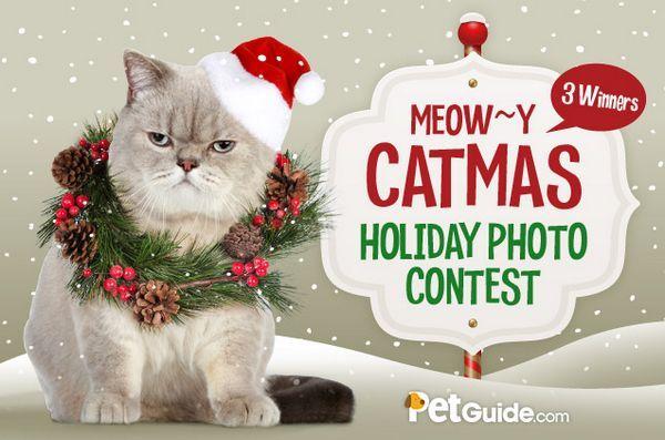 Concours de photos miaouy catmas