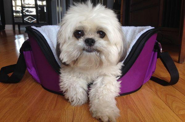 Le support de lilas wetnoz de Petmate est parfait pour les chiens branchés