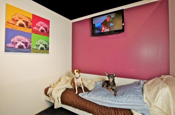 Les animaux de compagnie vivent la bonne vie à l`hôtel des animaux de compagnie de New York