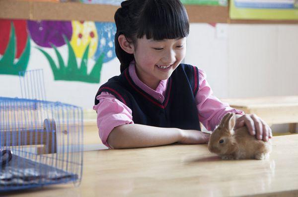 Le programme des animaux de compagnie en classe apporte de l`argent (et des animaux de compagnie) aux enfants