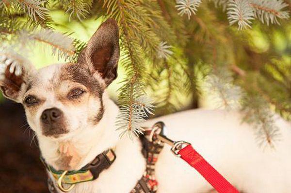 Le week-end de l`adoption nationale de Petsmart commence le 11 novembre