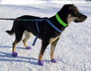 pawz-dog-boots-2