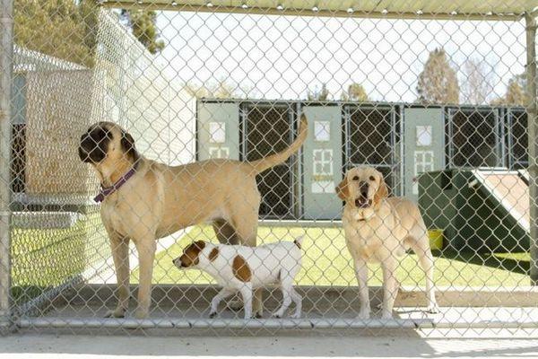 Avantages et inconvénients: chenils pour chiens contre embarquement à domicile