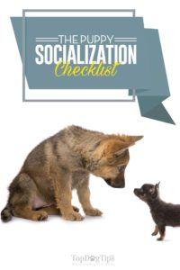 Liste de vérification de la socialisation des chiots pour les propriétaires nouveaux et expérimentés