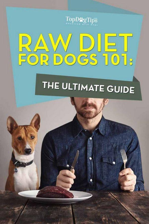 Régime cru pour les chiens 101