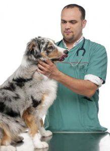 Science sur les régimes crus pour chiens
