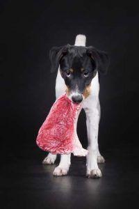 Viande crue pour chiens
