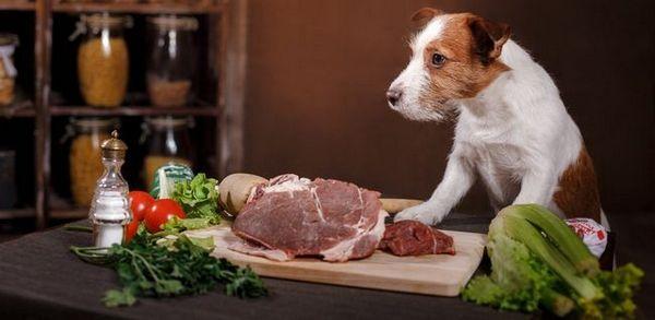 Alimentation crue de chien
