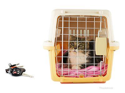 Réduire le stress des chats pendant les promenades en voiture
