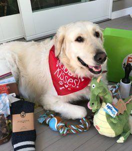 Boîte d`abonnement pour chien Pet Treater