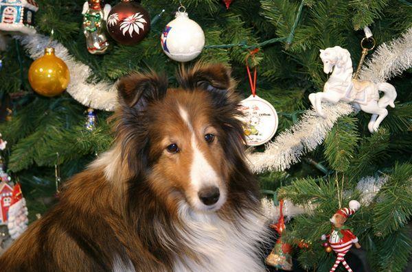 En toute sécurité sur les terrasses de votre chien pendant les fêtes de fin d`année