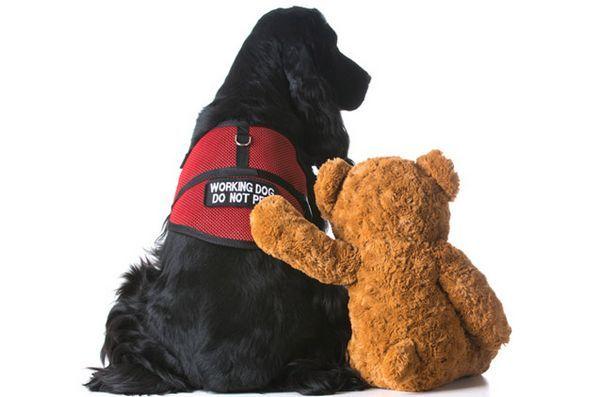 Le père Noël ne laissera pas une fille de 10 ans s`asseoir sur ses genoux à cause de son chien d`assistance