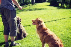 Comment les chiens apprennent-ils?