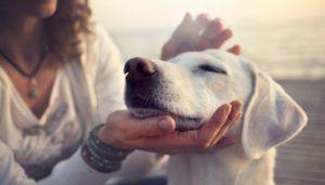 Bâtir une relation saine avec votre chien