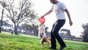 Êtes-vous et votre chien un bon match