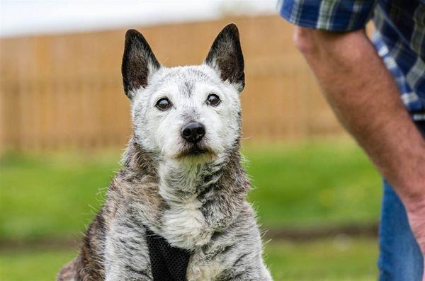 Le secret de la longue vie de chien a été révélé: il est gâté pourri!