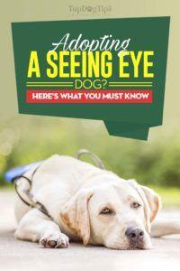 Voir l`adoption de chiens de vue: tout ce qu`il faut savoir en premier