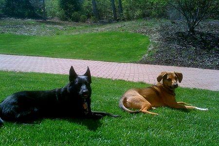 Automutilation et fausse boiterie du chien